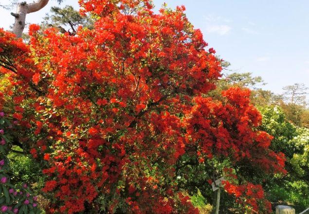 Terkesan dengan Jual Bibit dan Pohon Spathodea