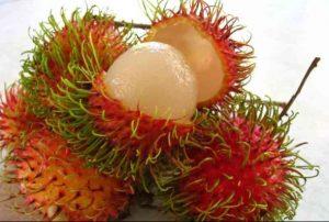 Cara Budidaya Rambutan Aceh diIndonesia